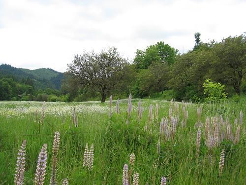 Field on Carpenter Creek Road