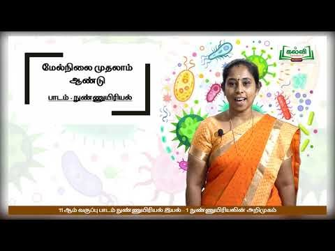 11th Micro Biology நுண்ணுயிரியல் அறிமுகம் இயல்திட்டவரை இயல் 1 Kalvi TV