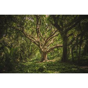 森林 Gahag 著作権フリー写真イラスト素材集