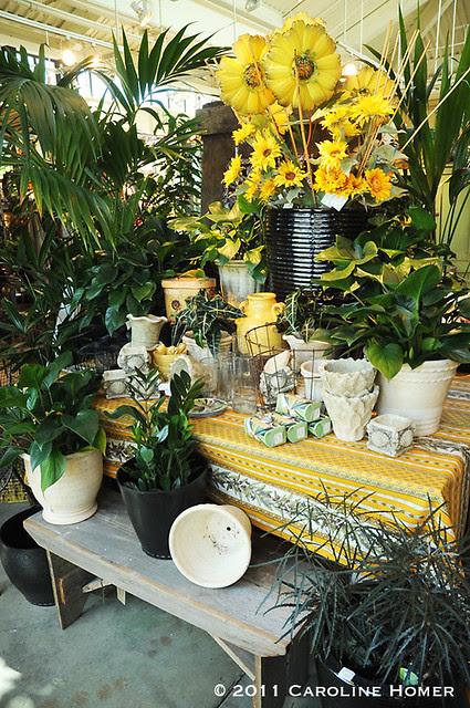 Sunny yellows