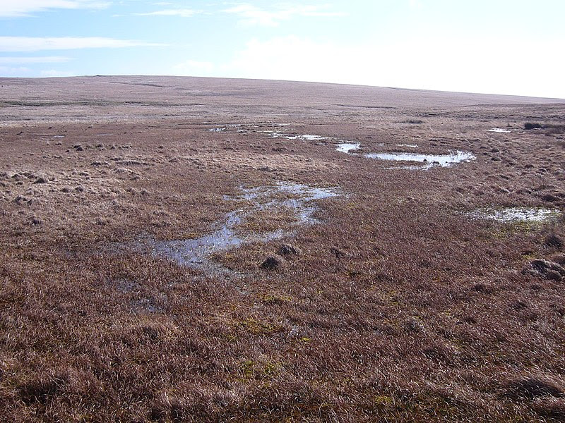 File:Aune head mire3.jpg