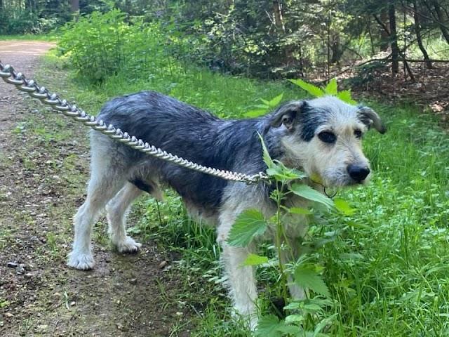Mitzi – 10 year old female Cross-Breed