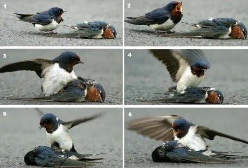 Gambar burung yang kematian kekasih.
