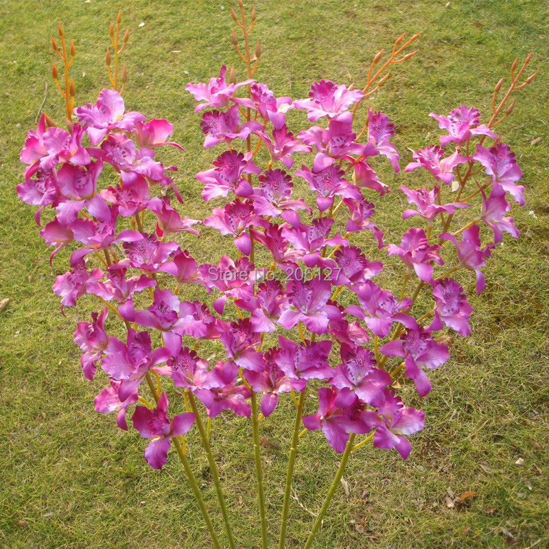 Online Get Cheap Bulk Orchids Aliexpress.com  Alibaba Group