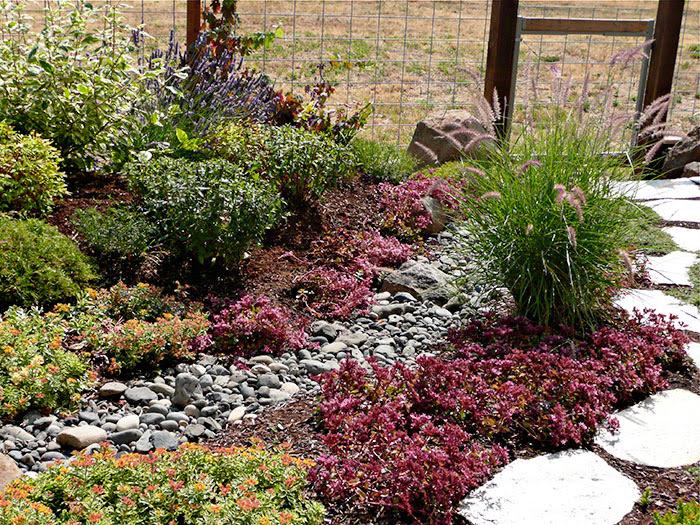 Dry Gardens Xeriscapes Mount Hood Gardens Inc