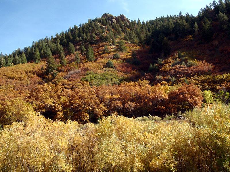 Rusting Gambel oak, Waterton, Colorado