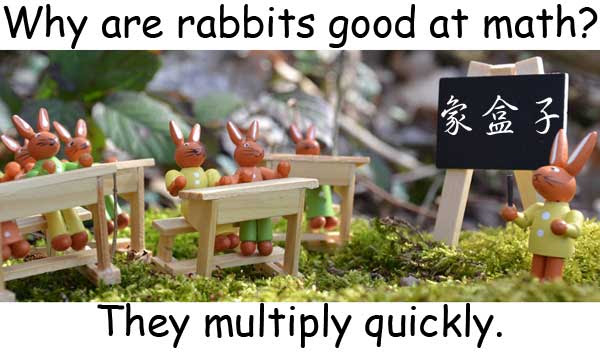 rabbits multiply