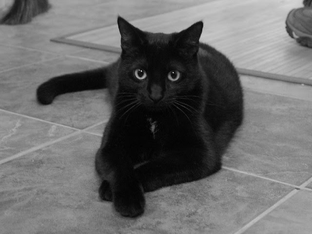 Kendi, my black cat