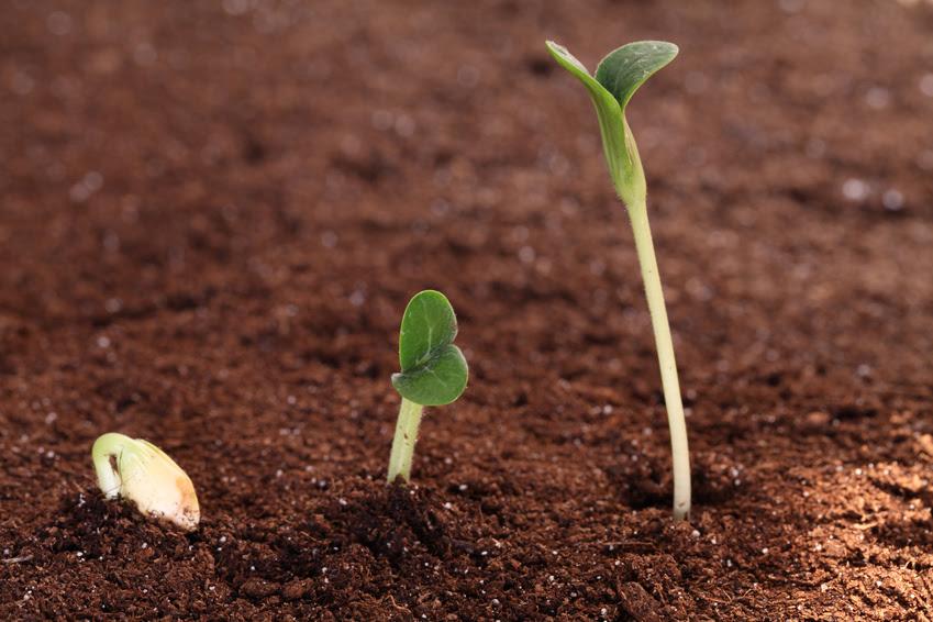 """Résultat de recherche d'images pour """"semis de graine"""""""