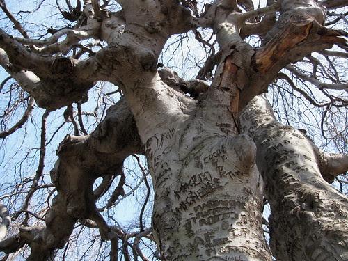 Names Tree