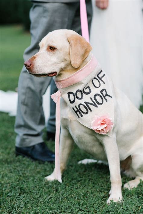 25  best ideas about Dog Ring Bearers on Pinterest   Dog
