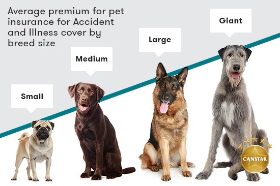 How Much Does Dog Insurance Cost By Breed and Age? - CANSTAR
