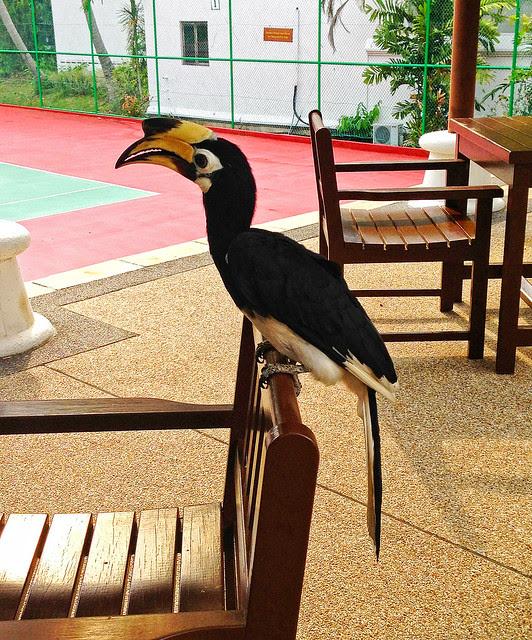Pangkor Laut Resort Hornbill
