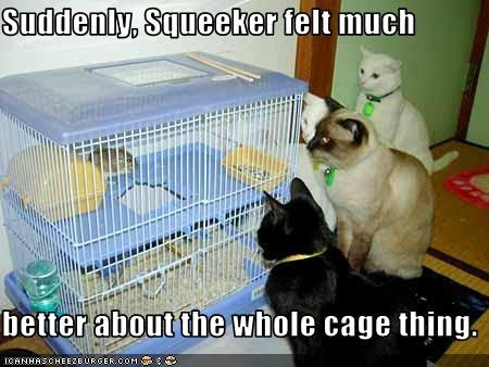 photo of a mouse in a cage surrounded by cats