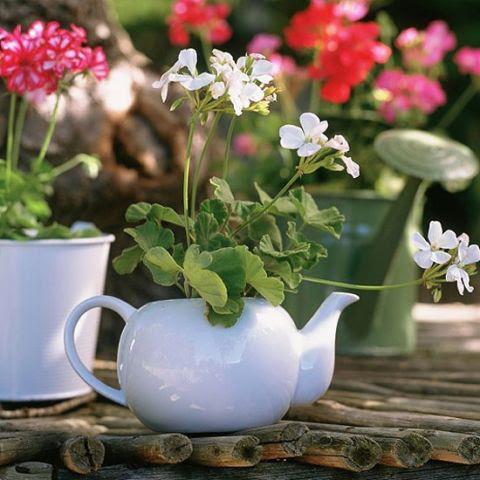 Pot Bunga Unik dari Teko Bekas