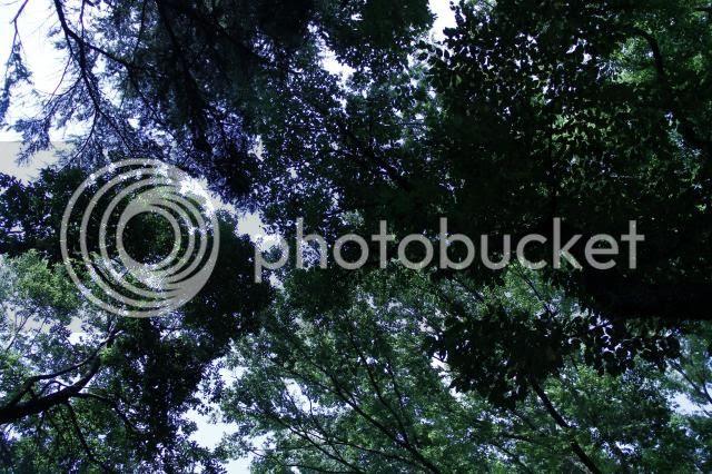 photo _MG_4157_zps5b600512.jpg