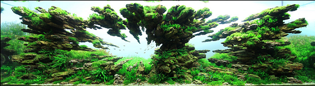 Aquascape Techniques