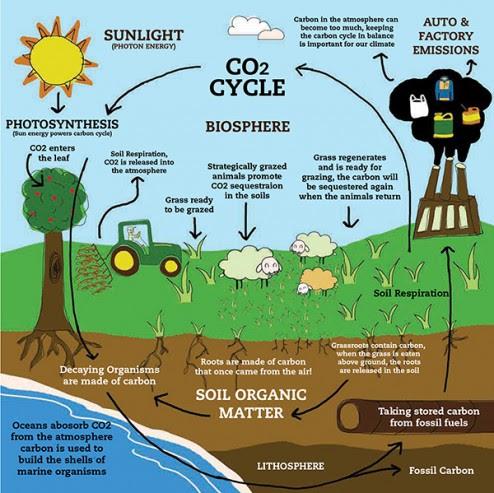 define agricultural science