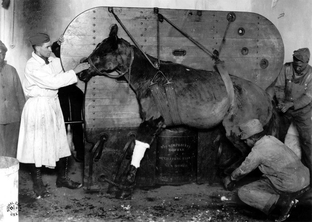 Os animais também lutaram na Primeira Guerra Mundial 40