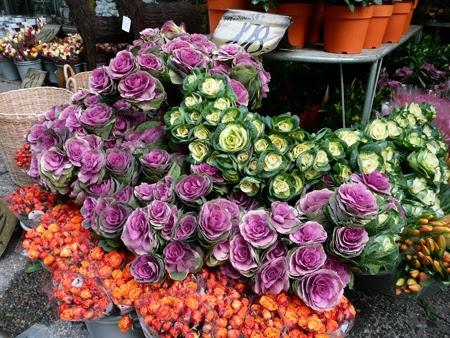 pretty cabbage