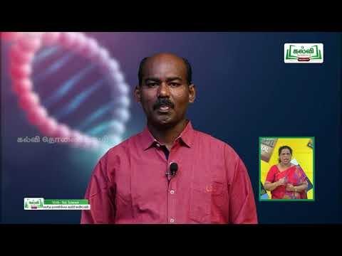 10th Science Biology Unit 16 தாவர மற்றும் விலங்கு ஹார்மோன்கள் Part 3