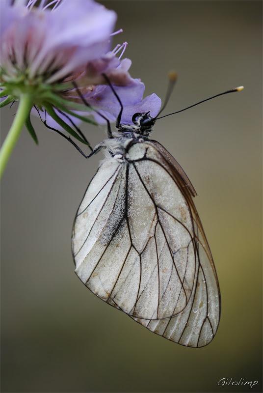 Mariposas Regalos De La Naturaleza Flores Silvestres Y Mariposas