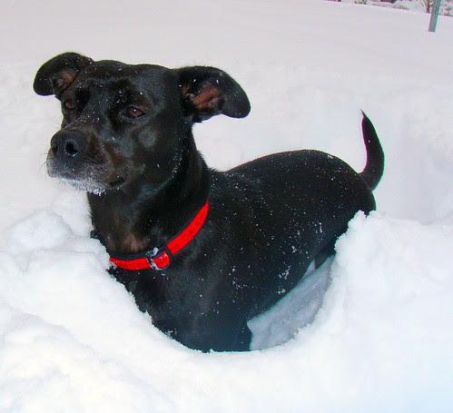 snow-boca3