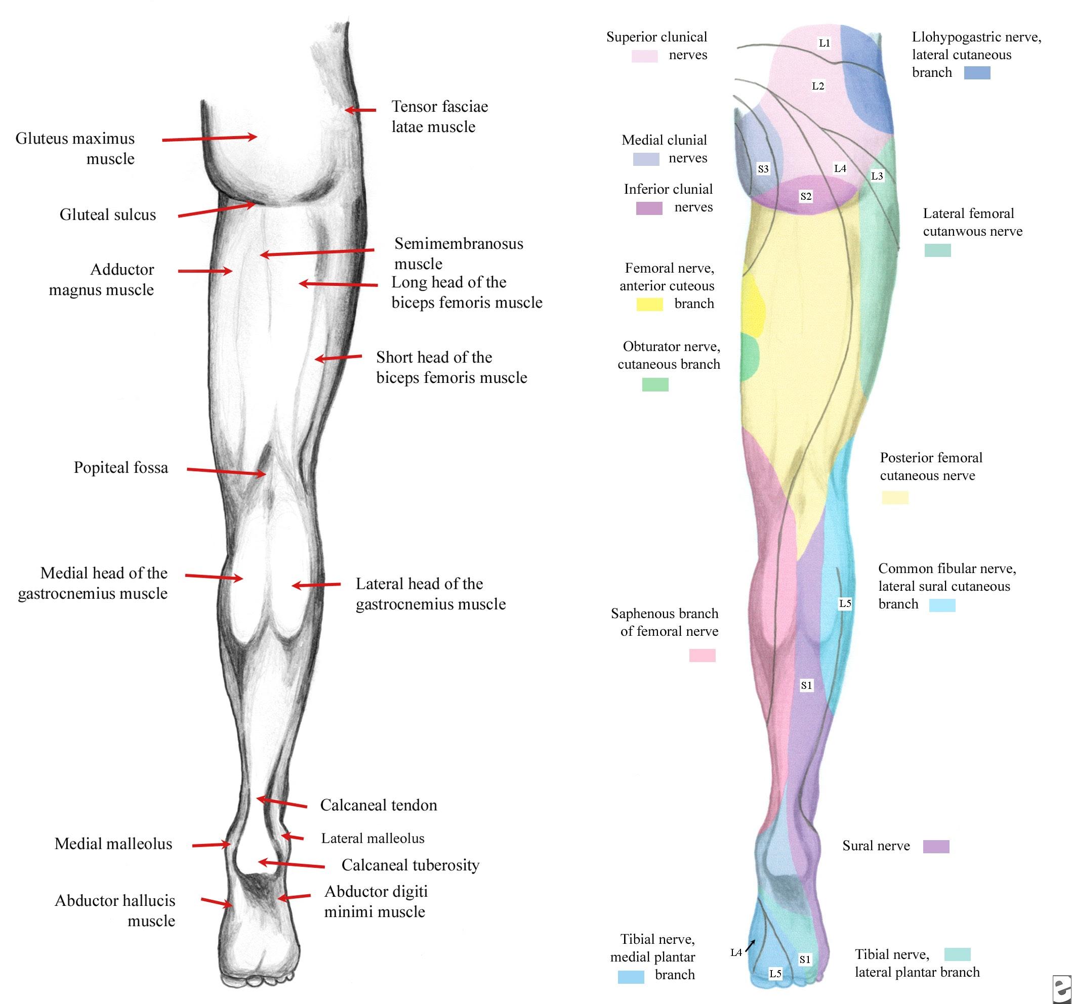 SA Radiology - Human Imaging Anatomy, Physics and Diagnostic Imaging ...