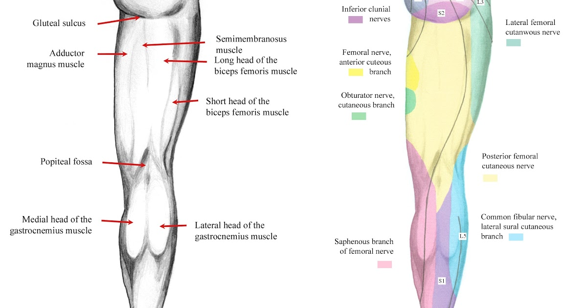 Free Surface Definition Anatomy
