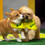 How To Adopt The 2019 Puppy Bowl Puppies, Because These Dogs & Many Others Deserve A Good Home - Bustle