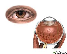 Ilustración de la anatomía interna y externa del ojo