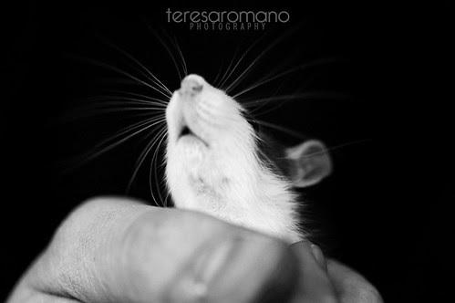 wanda the rat
