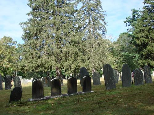 Huge Pine Tree by midgefrazel
