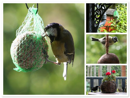 Feeding the birds at Plum Tree Cottage