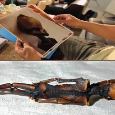 Posible cuerpo extraterrestre, Dr. Steven Greer