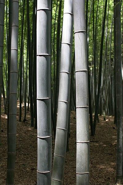 File:BambooKyoto.jpg