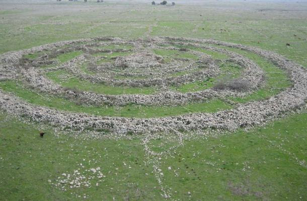 Livestock grazing nearby reveals scale of enormous stone rings on the plains of the Golan Heights.
