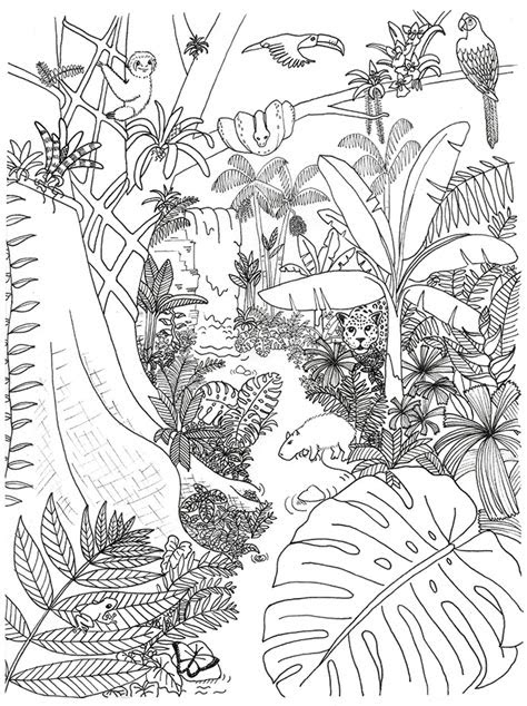 rainforest jungle  colouring pages