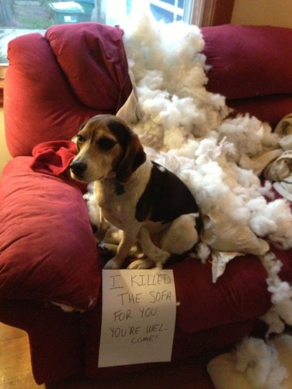 guilty-dogs-31