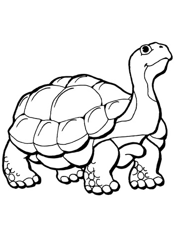 tortoise coloring page  supercoloring