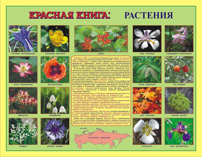 названия и фото растения красной книги россии