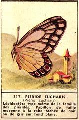 papilon 317