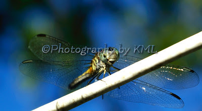 macro of a dragonfly against the blue sky