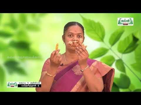 6th Science பயிற்சிப் புத்தகம் தாவர உலகம் Kalvi TV