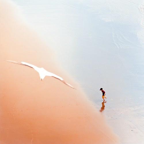 @cubagallery Summer beach bird cam por ►CubaGallery