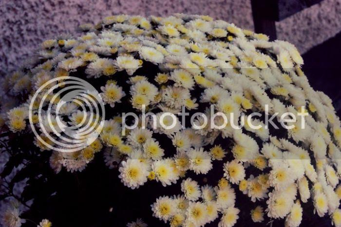photo fe3a52e4-0539-4204-9ec9-0e35d7cabf16_zpsb84fb4f4.jpg