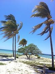 More Paradise Cove