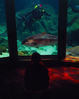 imagen vista interior acuario