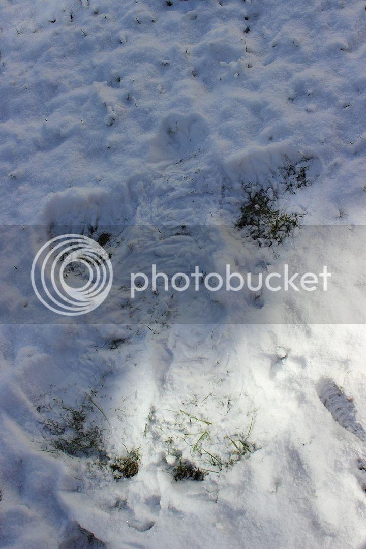 photo snow36_zpsdf17efa8.jpg