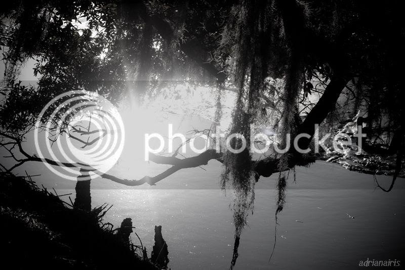 photo moonriver_zps7038c90a.jpg